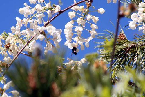 Center Bee