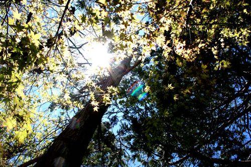 Sun tree rainbow
