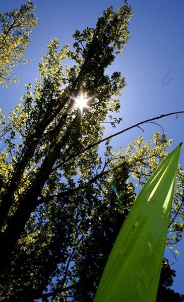 Tree N Flag